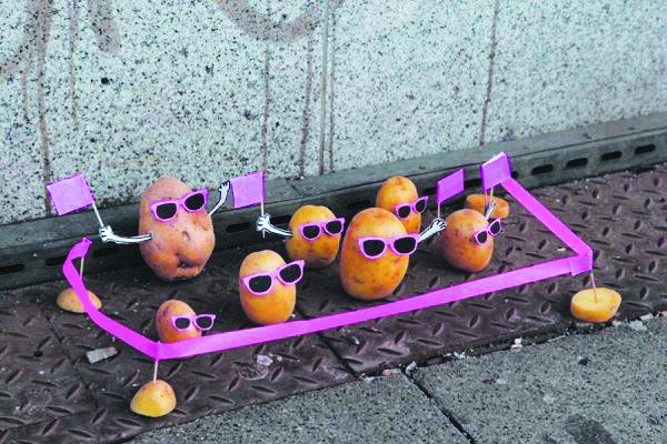Święto Ziemniaka - Piknik KD